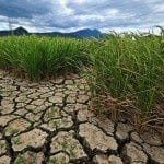 Thailand's Economy Hit Hard by Drought