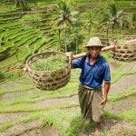 Philippines' Ban on GMOs Leaves Asia Shocked